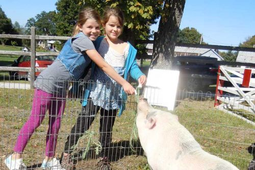 First time fair-goers Eloise and Alayna of Ferguson Falls, Ont. feed Piggy May of Westwinds Ranch