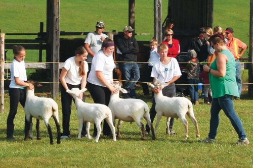 4Hers brought their sheep to the Maberly Fair for the first time this year.