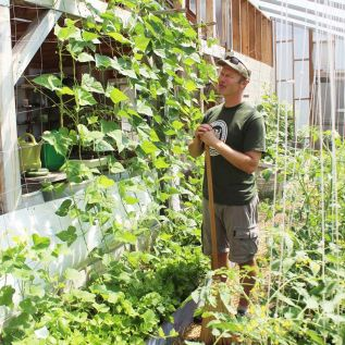 Things are looking up for Alan Macdonald and the beans in the Food Bank Community Garden greenhouse at the Grace Centre in Sydenham. Photo/Craig Bakay