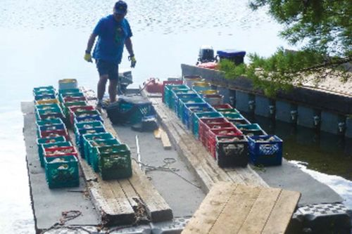 Milk crates full of river rock ready to be barged to the shoal for placement